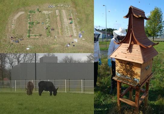 Photos d'actions RSE funs mises en place par CETIH : le potager bio, la ruche et l'éco-pâturage.
